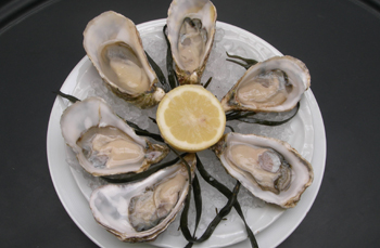picture of Oyster masterclass